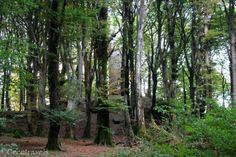 torre del Monte Cimino Italian Life, Walk In The Woods