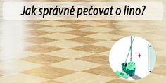 Tlustice – pěstování a léčivé účinky - RadyBydleni.cz Home Decor, Decoration Home, Room Decor, Home Interior Design, Home Decoration, Interior Design