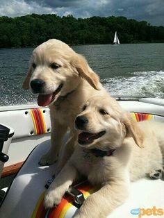 They look so happy!♡♡