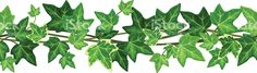 Vector horizontal seamless garland with green ivy leaves on a white. Ivy Leaf, Woodburning, Dividers, Watercolors, Stencil, Vines, Garland, Decoupage, Zen