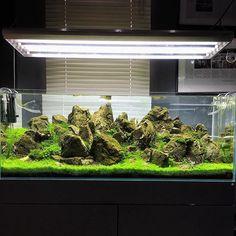 427 best aquariums images planted aquarium aquarium ideas rh pinterest com