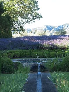 Provence. The Alpilles and Lavender - Vicki Archer