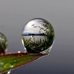 Wow how cool! Drop of water (rain or morning dew) on a blade of grass, with the lake just beyond seen in it like a looking glass.