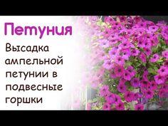 Посадка ампельной (вьющейся) петунии в подвесные горшки с использованием гидрогеля. // Ekaterina Lukovaya