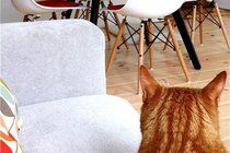5 Tips to Make Your House Appear Cleaner Than It Is | Apartment Therapy