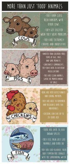 More than just food animals - reject speciesism - go vegan!