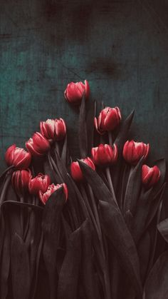tulips garden care Beautiful or modern / Flowers are always gorgeous Frühling Wallpaper, Flower Wallpaper, Wallpaper Backgrounds, Wallpaper Samsung, Nature Wallpaper, Amazing Flowers, Beautiful Flowers, House Beautiful, Beautiful Beautiful