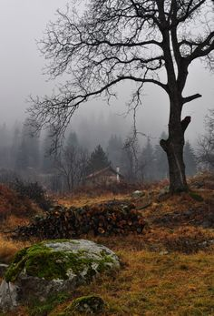 a dark and foggy forest Beautiful World, Beautiful Places, Foto Nature, Fotografia Macro, Autumn Scenes, Autumn Cozy, Late Autumn, Autumn Morning, Foggy Morning