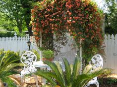 A wooden Arbor with bright orange trumpet vine . Blooms in early Spring and the greenery lasts through all seasons. Attracts humming birds. Sand peebles to create path . Decorated with white wrought iron garden furniture.