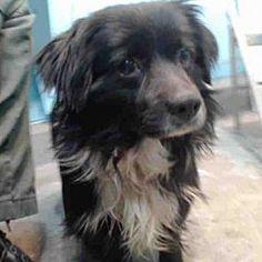 Urgent-- Baldwin Park, California - Terrier (Unknown Type, Medium). Meet A5163260, a male dog for adoption. https://www.adoptapet.com/pet/21342742-baldwin-park-california-terrier-unknown-type-medium