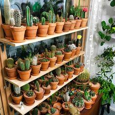 Cactus flower – Home Decor Gardening Flowers Mini Cactus Garden, Succulent Gardening, Cactus Flower, Cacti And Succulents, Planting Succulents, Flower Pots, Planting Flowers, Indoor Cactus Plants, Cactus House Plants