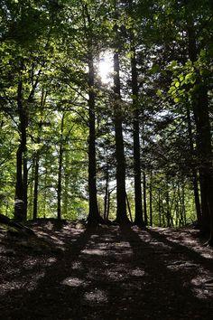 Shadows in the forest, Fantoft, Bergen, Norway