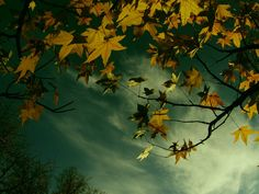 Forest Autumn Nature Photography