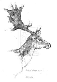 Fallow Deer by ~Narsilia on deviantART