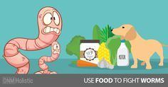 Everyday Foods To Get Rid Of Dog Worms