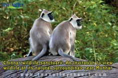 Chinnar Wildlife Sanctuary 34 species of mammals and 965 species of flowering plants that can be enjoyed by a nature walk or trekking in the sanctuary.