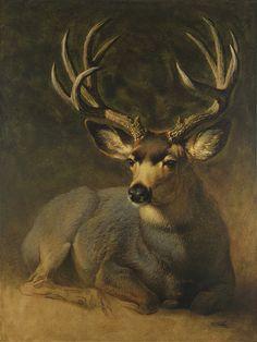 Winter Grey Buck by Ezra Tucker