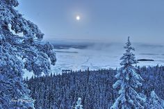Landscape in Koli, Finland. Winter Beauty, Winter Wonder, My Land, Landscape Pictures, Countries Of The World, Outdoor Life, Natural Wonders, What Is Like, Land Scape