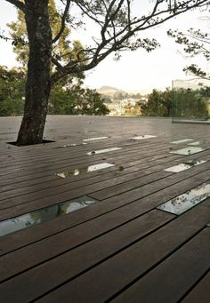 timber decking and glass panels... also decking AROUND a tree - awesome!