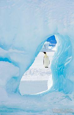 Emperor penguin framed by a whole in an iceberg. Weddell Sea, Antarctica. David C. Schultz.