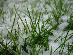 One of the most damaging things to your lawn in the winter is having people walk on it. After the first freeze of the year, grass plants go dormant, which gives them protection against the snow and cold but makes grass more vulnerable to being crushed underfoot. It's also important in all four seasons to ensure that your lawn has adequate drainage. If standing water freezes on your grass, it will damage the delicate crowns and tissues of the plant.