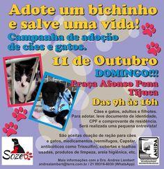 BONDE DA BARDOT: RJ: Campanha de adoção de animais na Praça Afonso Pena, na Tijuca, neste domingo (11/10)