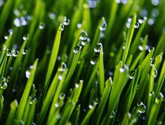 early morning dew on the grass