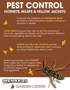 Pest Control: Hornets, Wasps And Yellow Jackets http://www.menards.com/main/c-19061.htm