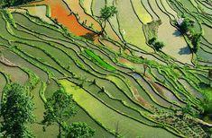 44-magnifiques-photos-de-rizieres-terrasse-34 44 magnifiques photos de rizières en terrasse