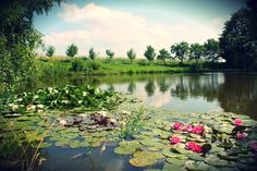 Waterlilly photo in the countryside