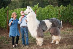 Take wine tasting to the next level by throwing in a llama or three.