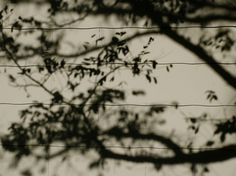 "Saatchi Online Artist TOULA MAVRIDOU-MESSER; Photography, ""NEW Photographic Art Print For Sale: Shadow Branches In Silhouette"" #art"