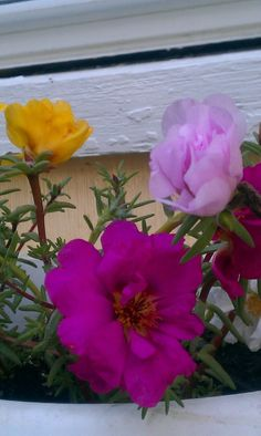 Portulaca....I love it :)