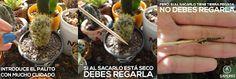 catus y suculentas Moss Terrarium, Cactus Y Suculentas, Something New, Succulents, Beef, Plants, Food, Patio, Terrace