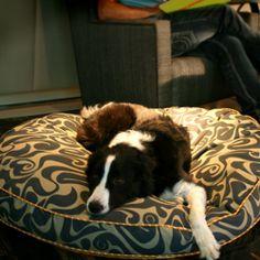 awsum dog bed! from flea bag