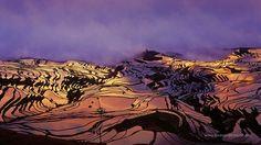 rice terraces (21)