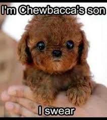 Dog star wars meme cute.