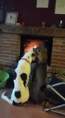 GIF These dogs have a honeymoon I Love Dogs, Cute Dogs, Gifs, Animated Gif, True Love, Animals And Pets, In This Moment, Make It Yourself, Romantic Video