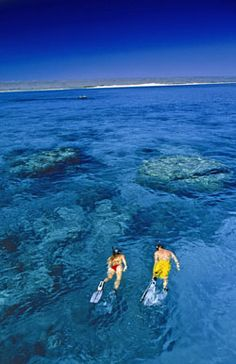 Snorkel in the Great Barrier Reef, Australia is on my bucket list! Oh The Places You'll Go, Places To Travel, Places To Visit, Dream Vacations, Vacation Spots, Wonderful Places, Beautiful Places, The Ventures, Great Barrier Reef