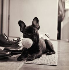 yes, I know, another frenchie...