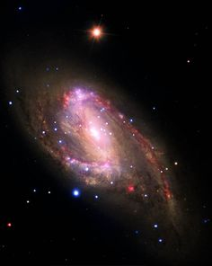 Stargazing Wolf : Ruby Spiral