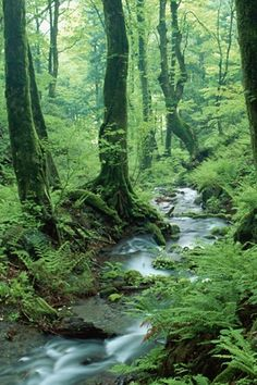 Forest Stream, one of my favorite things!
