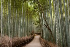 Bamboo groves of Arashiyama in Kyoto, Japan / 27 Surreal Places To Visit Before You Die via BuzzFeed
