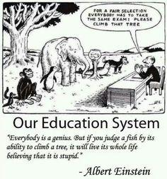 """""""Todos somos genios, pero si juzgas a un pez por su habilidad de trepar un arbol, pasara toda su vida creyendo que es estupido"""". -Albert Einstein quotes. Educaction Systems"""