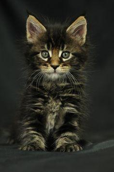 Bilder - Katzen