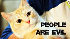How To Tell If Your Friends Are Evil People - Cat Confessions