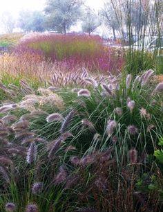 Фото с красивыми травами.. Обсуждение на LiveInternet - Российский Сервис Онлайн-Дневников