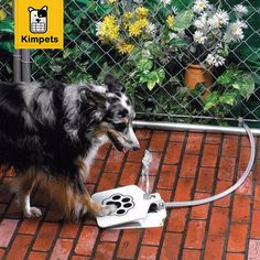 KIMHOME Alimentador Automático de Agua PARA MASCOTAS Perro Mascota Alimentadores de Acero Inoxidable Pedal de Alimentación Eléctrica de Alta Calidad Y Tecnología en Productos de Alimentación de Hogar y Jardín en AliExpress.com | Alibaba Group