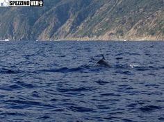 Delfini a Spezia