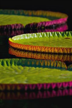 Photo Contest - Lily pads on a lake, possibly the Amazon